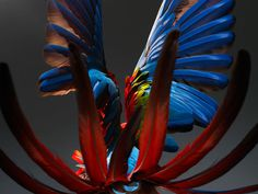 Perroquet 03.jpg, oct 2008 #photography #parrot #bird