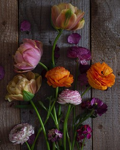 Absolutely Delightful Flowers Photography by Dianna Jazwinski