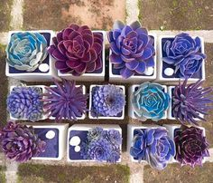 Poppytalk: Sunday Reading #garden #succulents #purple