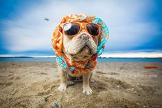 Expressive And Whimsical Portraits of Dogs by Kaylee Greer