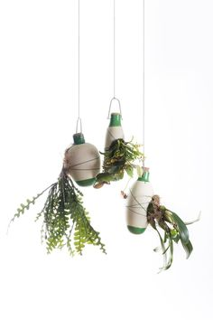 Aerial Ceramic Vases for Indoor Epiphytic House-Plants