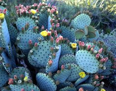 BUFF DISS BLOG #photography #colour #flowers #cacti