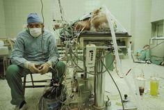 Cirurgião cardiovascular após um transplante de coração bem sucedido e que durou 23 horas. Seu assistente dorme no canto da imagem
