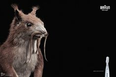 Precision Trimming on the Behance Network #retouch #photography #animal #squirrel