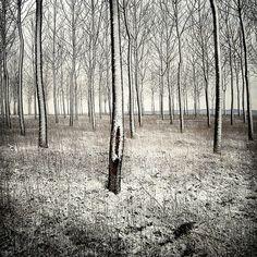 Buamai - a forest