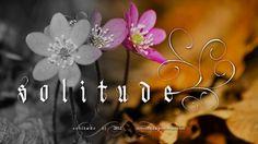 All sizes   Solitude   Flickr - Photo Sharing! #calligraphy #gothic #swirls #steveczajka #solitude #textura #flowers