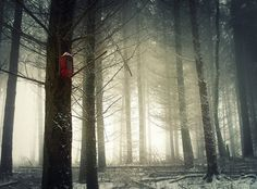 Forest Photography by Bernd Rettig
