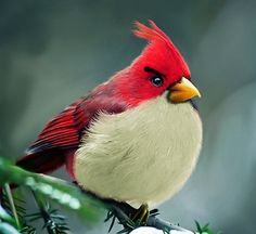 Angry Birds in the Wild #angry #bird