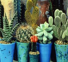 cacti2.jpg 455×420 pixels #cacti