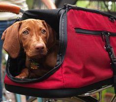 Sleepypod Air In-Cabin Pet Carrier #gadget