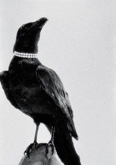 Sara Lindholm #crow