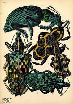Baubauhaus. #insects #color #bugs #poster #art #animal
