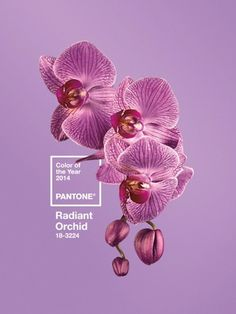 this isn't happiness™ Peteski #orchid #color #pantone