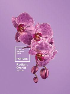 this isn't happiness™ Peteski #pantone #color #orchid