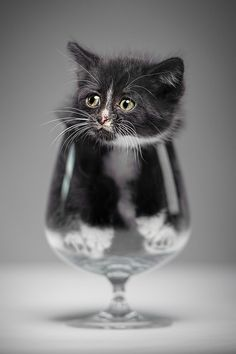 CJWHO ™ (Have a drink? by Denis CJWHO: facebook | ...) #kitten #moaw #cat #photography #animals #cute #glas