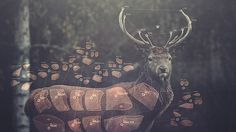 Matta - Release The Freq | Flickr - Photo Sharing! #deer #matta #design #video #meat #photography #music