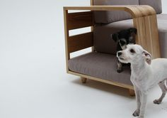 07 #sofa #dogs