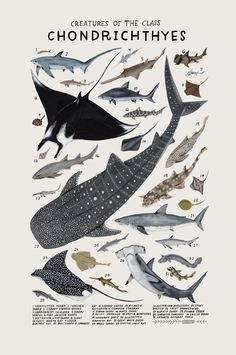 Playful Watercolors Illustrate the Many Classifications of the Animal Kingdom | Colossal