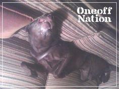 Oneoff Nation #sleeping #sleep #oneoff #dog