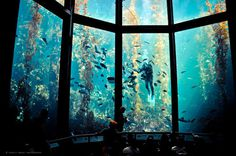 CJWHO ™ (Monterey Bay Aquarium) #water #bay #design #interiors #monterey #landscape #aquarium #nature #architecture