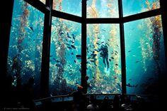 CJWHO ™ (Monterey Bay Aquarium)