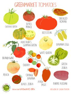 Grow NYC Tomatoes Poster #claudia #pearson