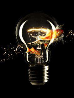 Light Fish #lamp #marinelli #fish #rodrigo #gold #surreal #wallpaper #light