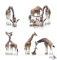 Animals Photography by Werner Dreblow