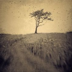 joan kocak photography #tree