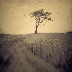 joan kocak photography #tree