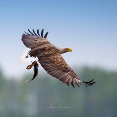 Birds of Germany: Wonderful Bird Photography by Anke Kneifel