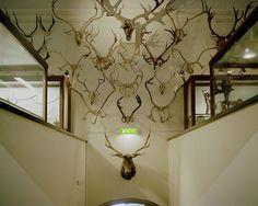 de druknede #antlers #history #natural #stuffed