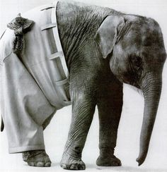 Tutte le dimensioni |sanforized 1963 | Flickr – Condivisione di foto! #photography #animal #elephant