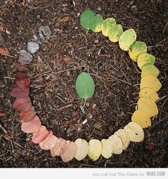 9GAG - Just for Fun! #leaves