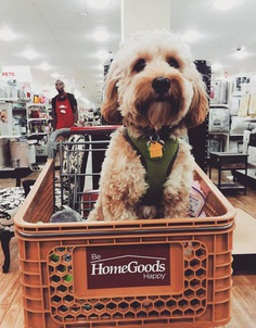 Most Dog Friendly Stores in America - Home Goods