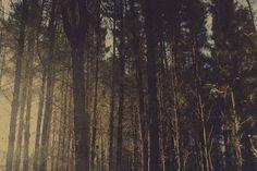 Phantom Forest   Ligthelm