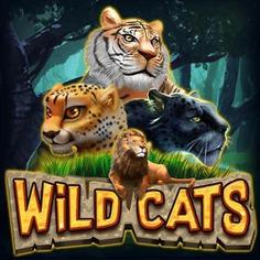 Wild Cats | Prominentt Games