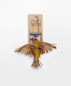paradoxical photo manipulation by nancy fouts #sculpture #nipper #bizarre #dead #photo #trap #mousetrap #bird #feathers #photography #manipulation #sparrow #death