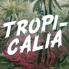 Tropicalia #font #palm #tropical #flyer #tropicalia #nature #brush #music #psychedelic