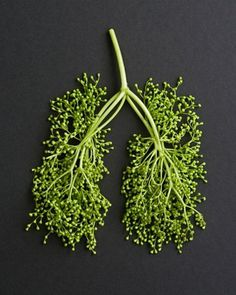 FFFFOUND! | SZ-Magazin : Katrin Rodegast Grafik & Illustration #parklands #photography #lungs