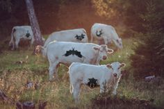 What do you see? #Rorschach #cows #psychology #grazing #field #animals
