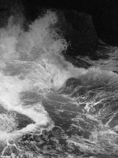 arborvitae #white #photo #black #wave #and