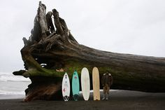 Cursed #beach #tree #surfboard