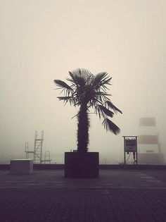 Deserted City | Fubiz™ #palm #fog #swim