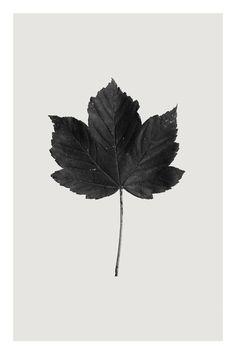 """Saatchi Art Artist Anders Bundgaard; Photography, """"Sycamore"""" #art"""