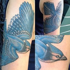 Bluejay #tattoo