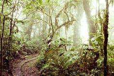 Zack Seckler | Photographer - Landscape #plants #photo #landscape #nature #trees #green