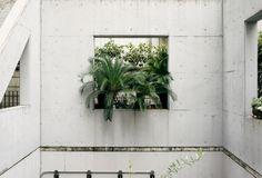 STREET ETIQUETTE – concrete and vegitation
