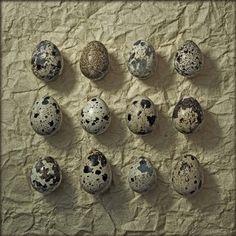 Things Organized Neatly: Plover's eggs, 1 dozen. #eggs #plover #pattern