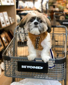 Most Dog Friendly Stores in America - Bed Bath & Beyond